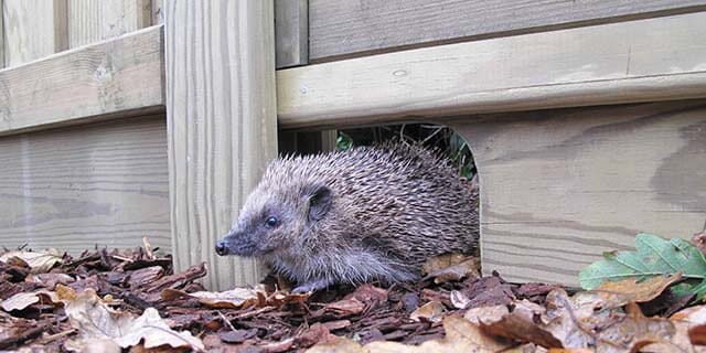 hedgehog gravel board