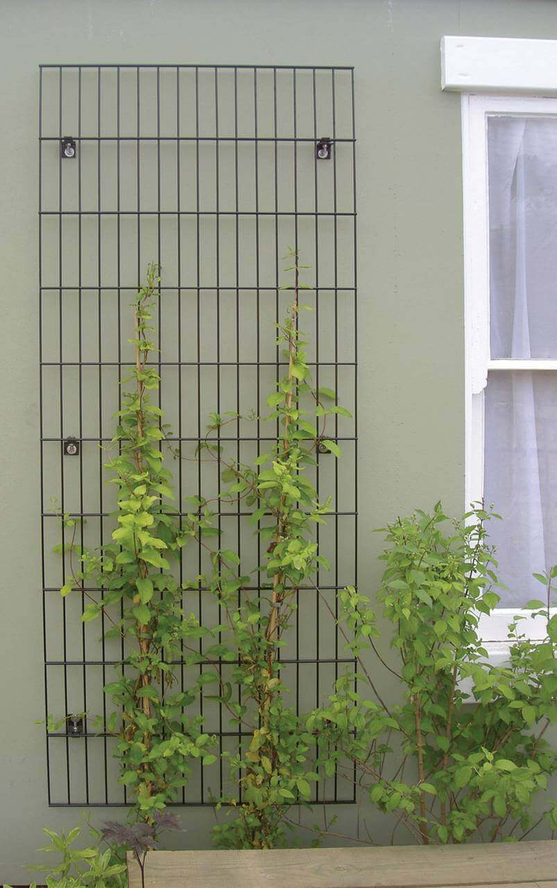 Trellis fence panels jacksons fencing for Plante jardin ombre