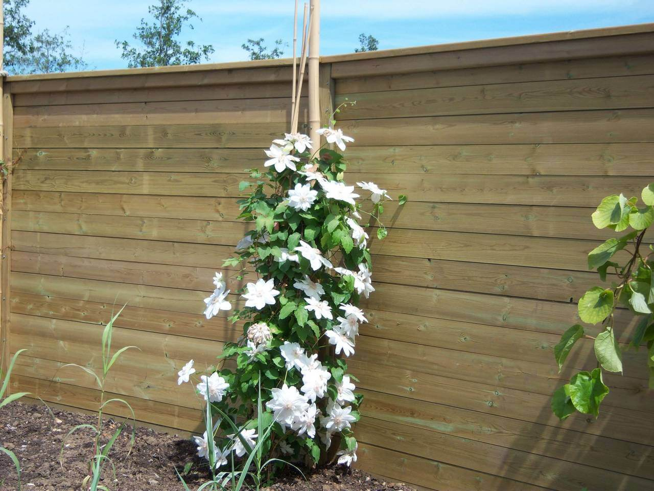 Acoustic Fencing in a garden