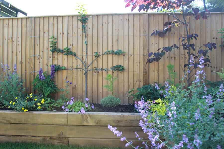 Best climbing plants for fencing