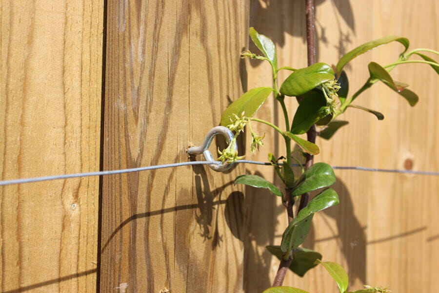 Growing climbing plants