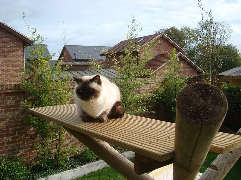 Cat on climbing frame made with Jacksons Fencing products