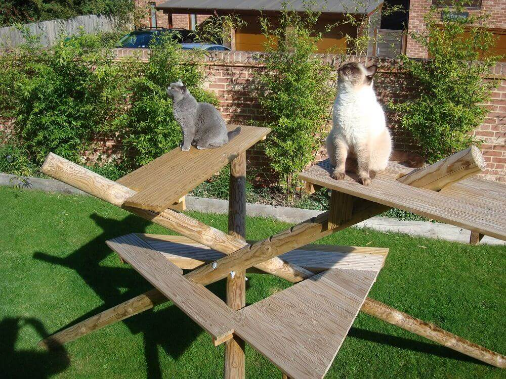 Cats climbing frame made from timber