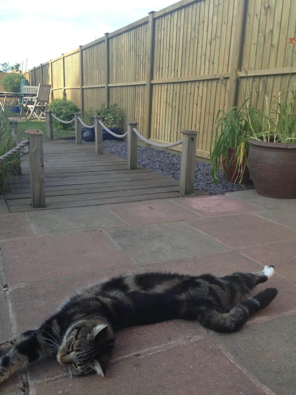 Fence panels with cat
