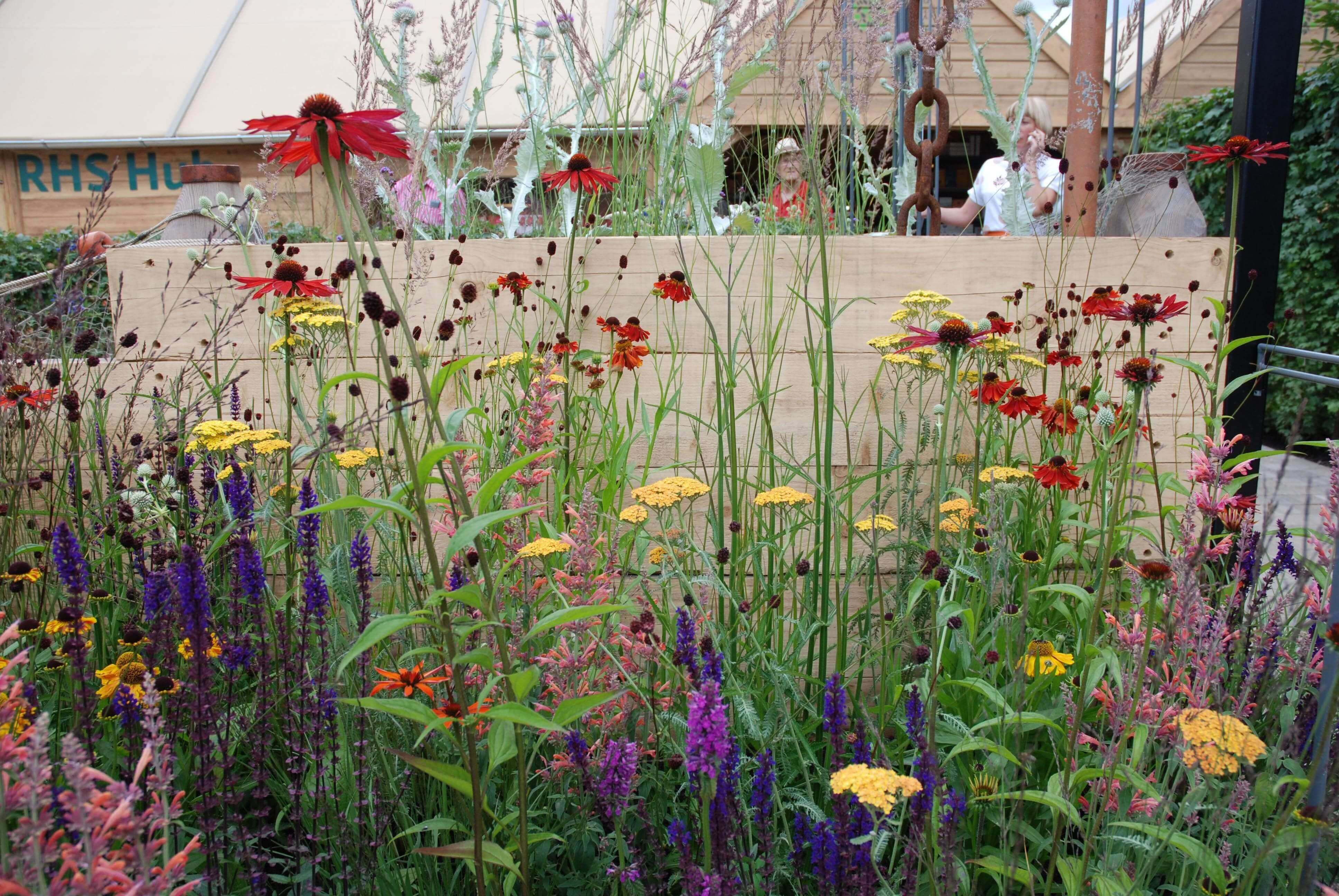 sangua sorba and echinacea in Bristol garden