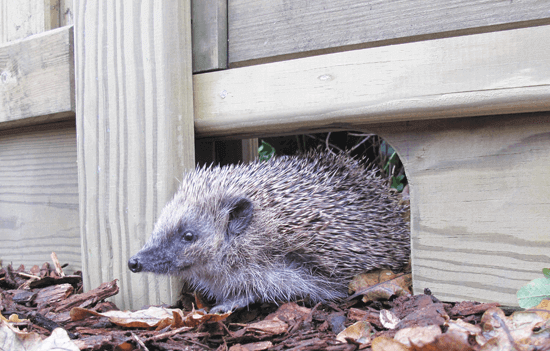 Hedgehog friendly gravel boards