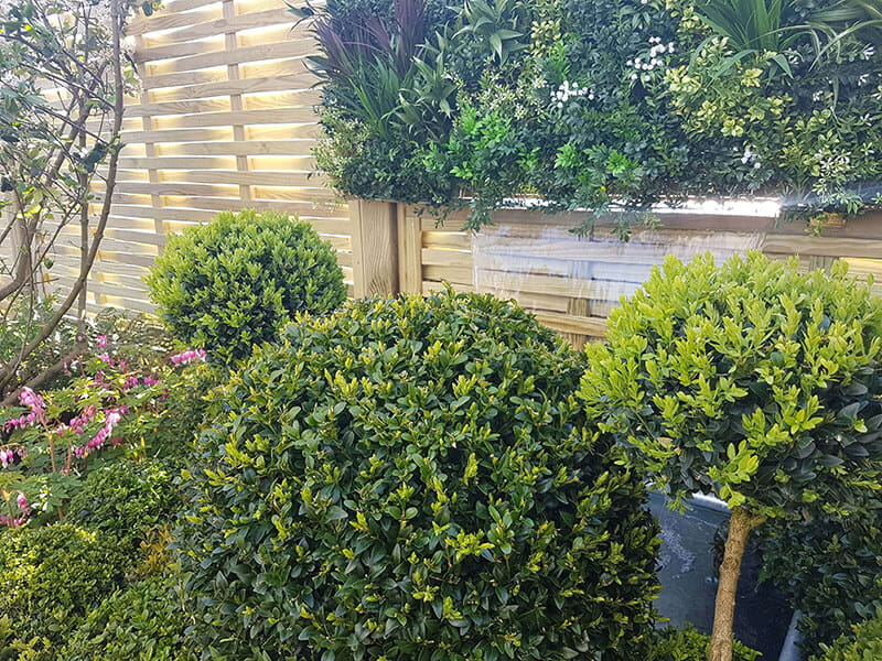 lush evergreen planting and woven fence panels