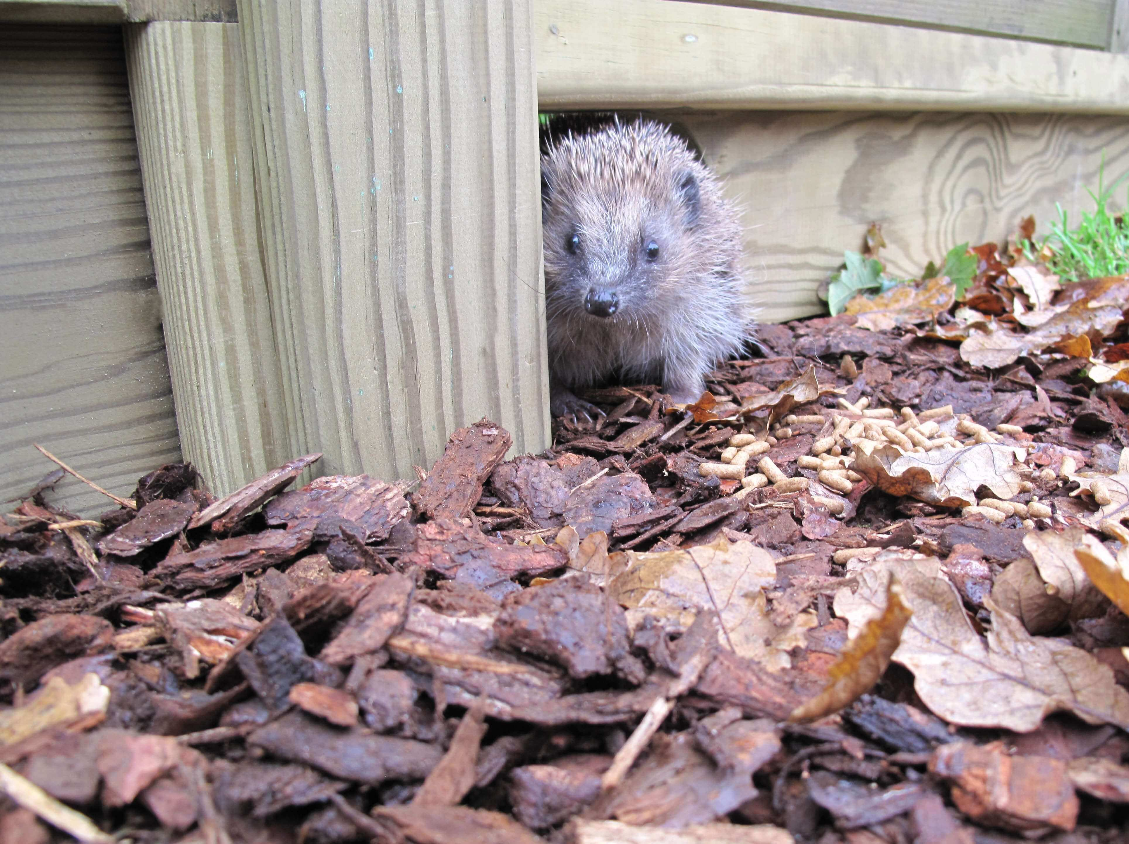 Gravel boards for hedgehogs
