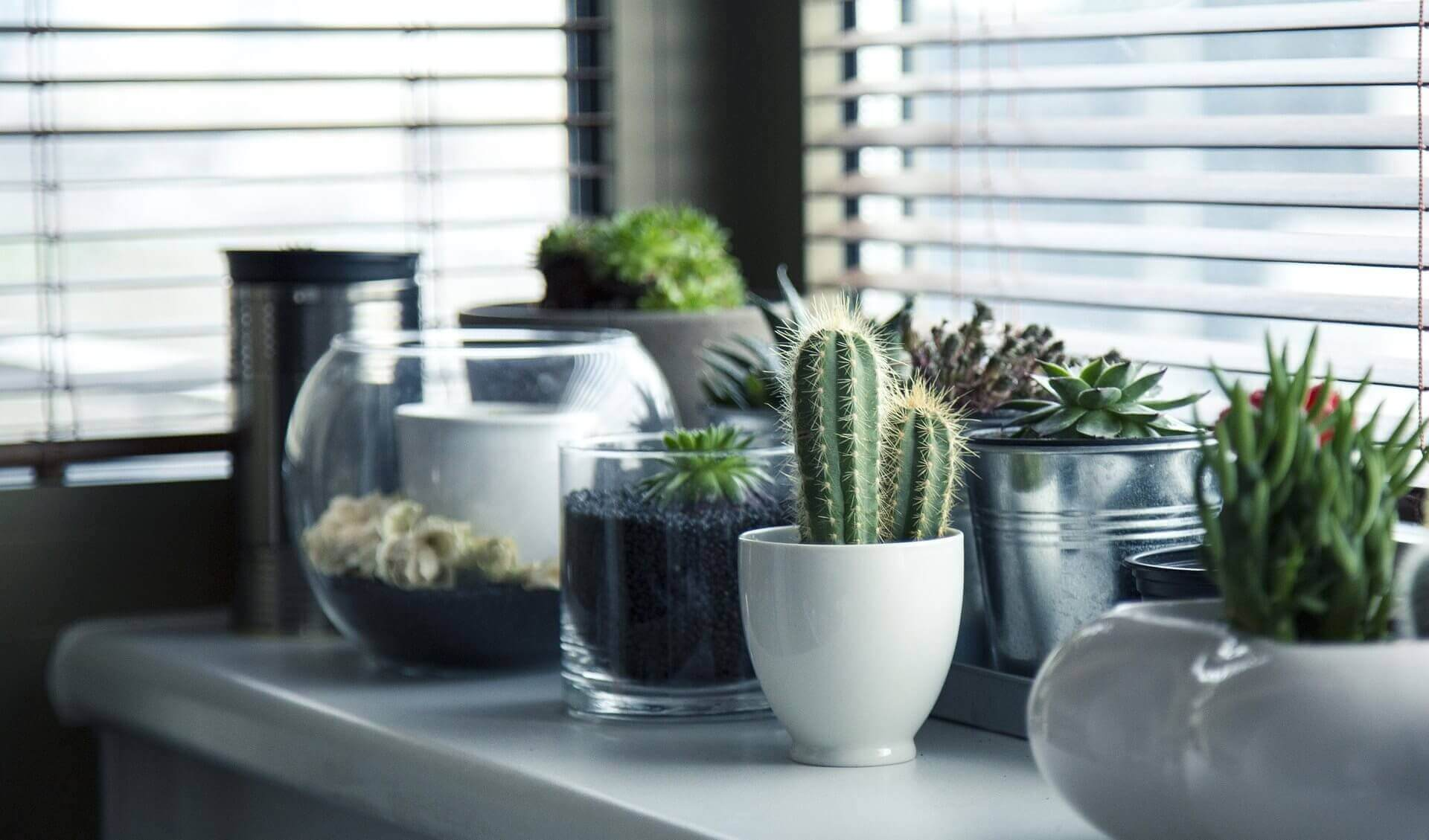 House plants for a home office