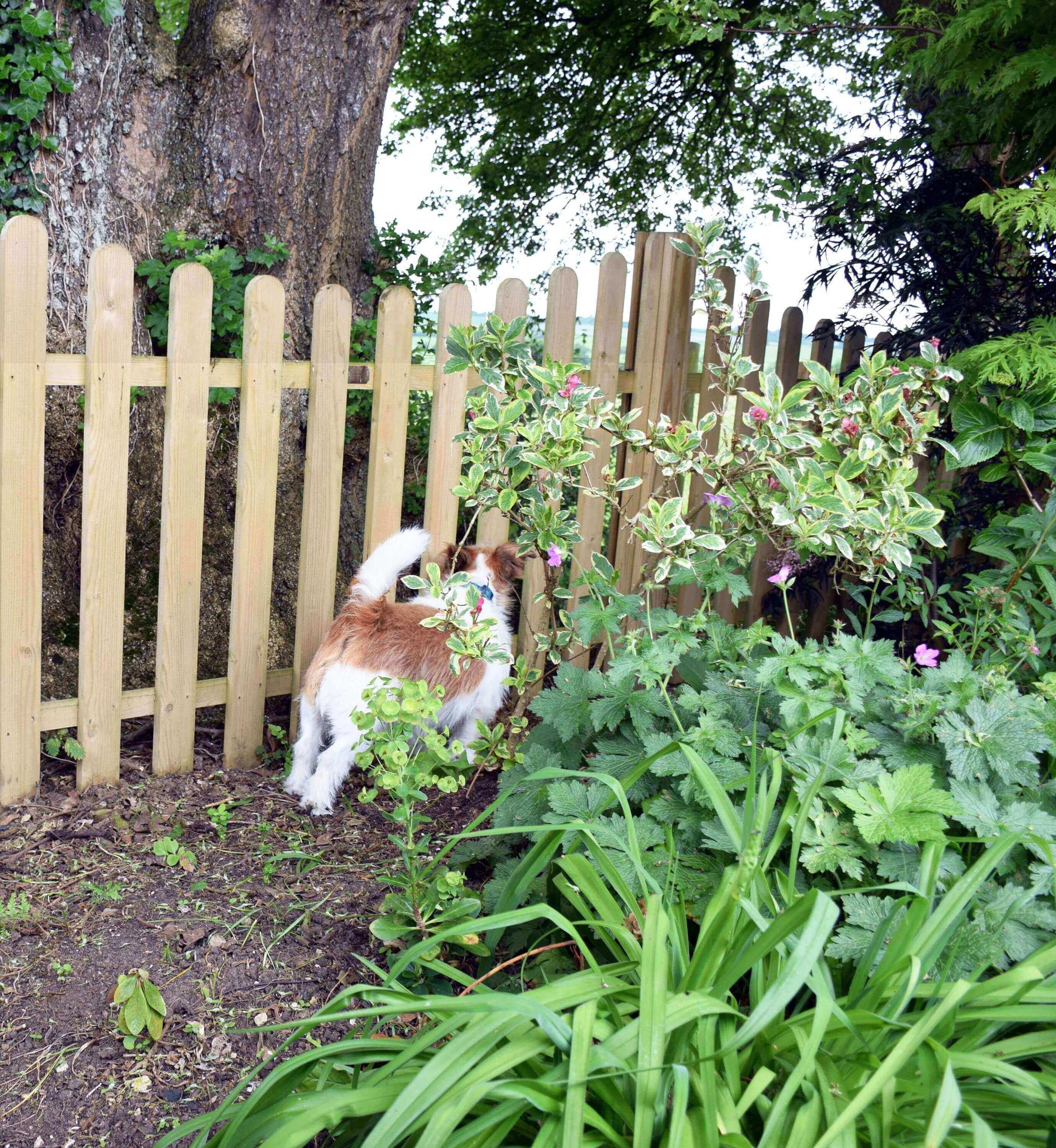 Fence for a dog