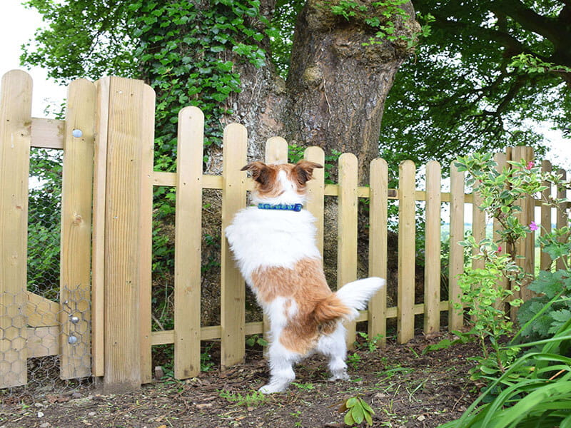 Strong fence for dog