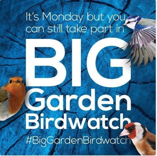 Big Garden bird Watch Monday