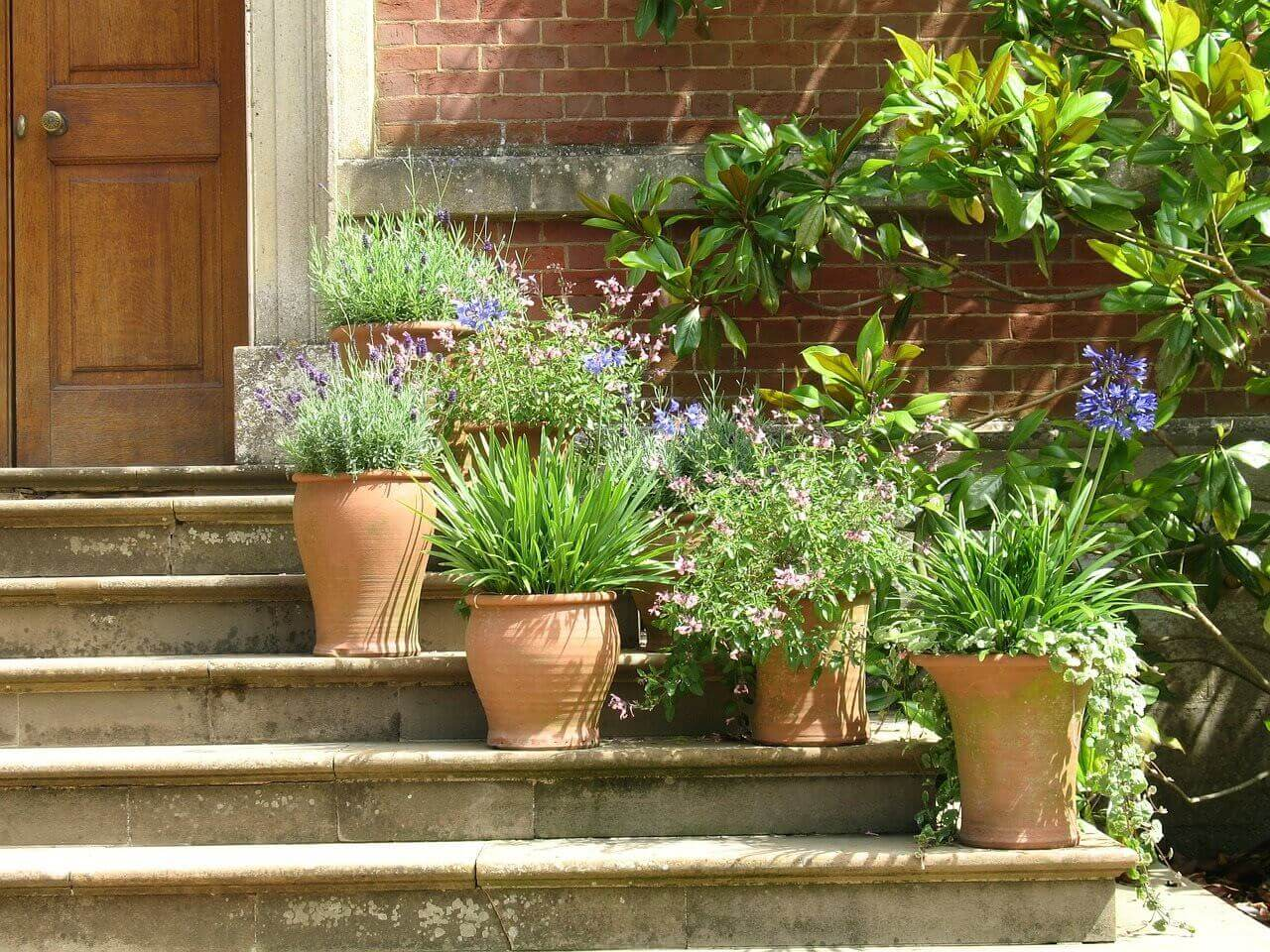 Plants pots on stairs
